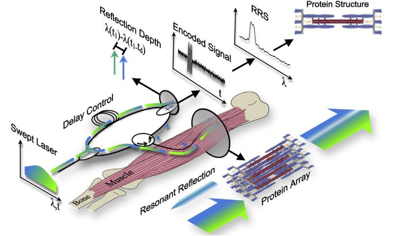 A minimally invasive tool to measure muscle impairment