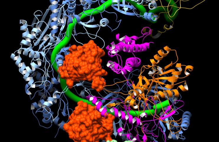 A molecular on/off switch for CRISPR