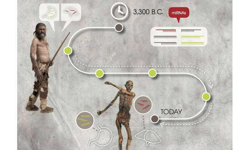 Ötzi the Iceman: Researchers validate the stability of genetic markers