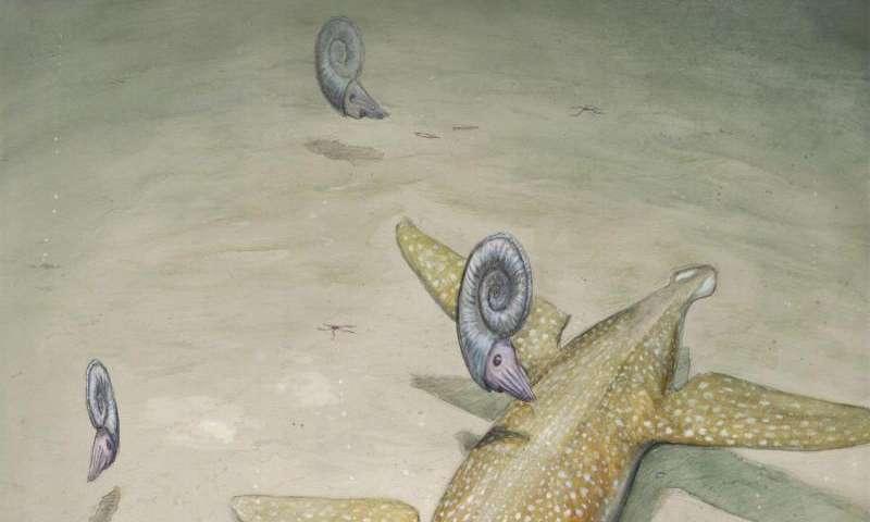 Ancestor of sea reptile super-predators found in Germany