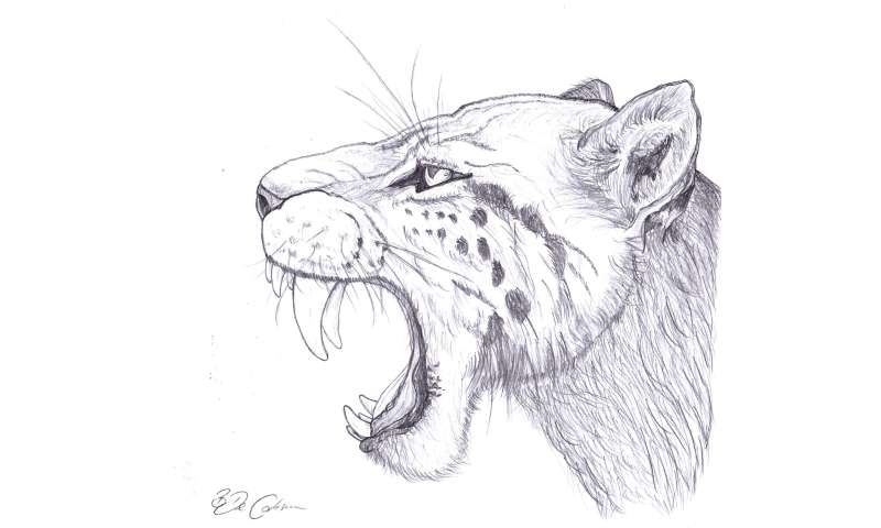 Ancient DNA offers new view on saber-toothed cats' past