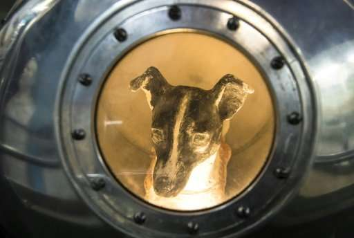 An effigy of Laika  inside a replica of satellite Sputnik II is on display to visitors at the Central House of Aviation and Cosm