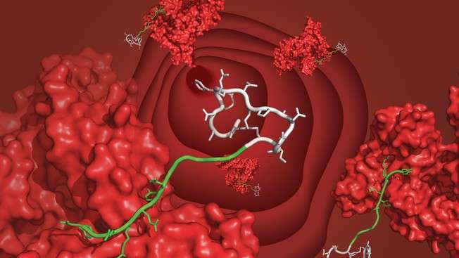 A new ligand extends the half-life of peptides from minutes to days