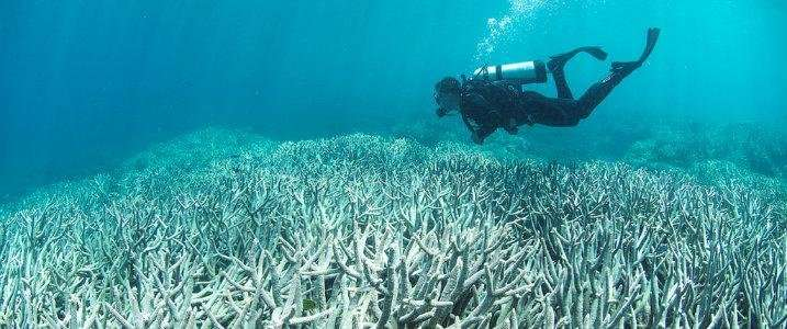 Another danger sign for coral reefs: Substitute symbiont falls short