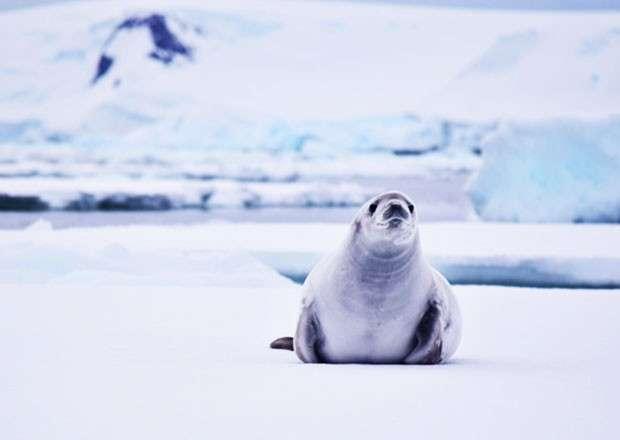 Antarctica's biodiversity is under threat