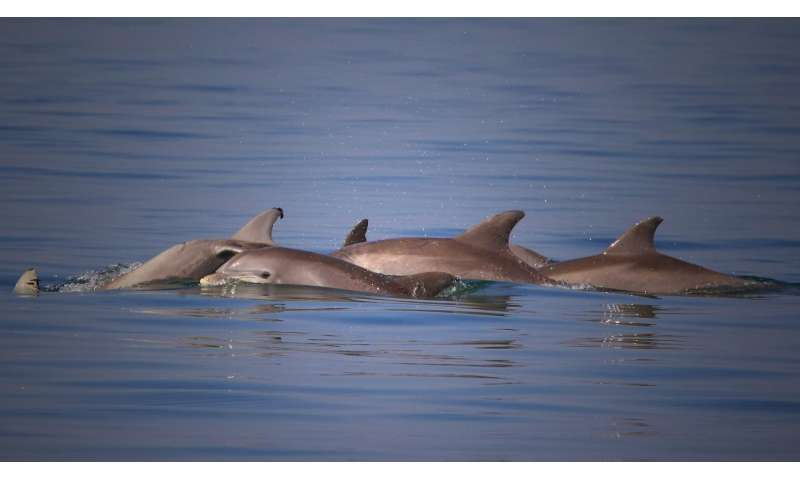 Approach tested at FAU first to look at dolphin immune system