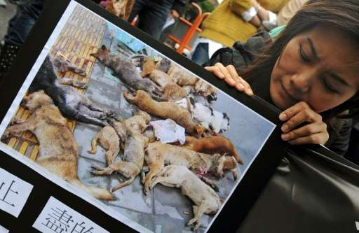A protester holds a picture of dead dogs during a demonstration in front of the Taiwan government's agriculture council, in Taip