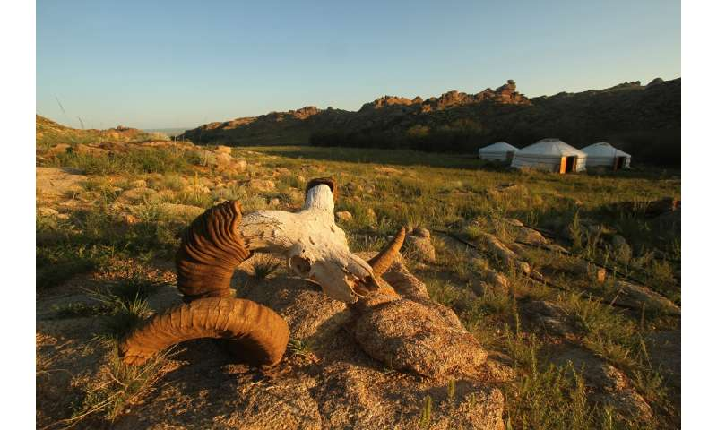 Are herders and livestock bad for rare wildlife? It's complicated.