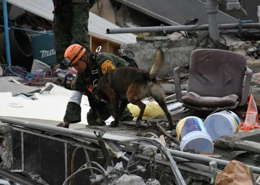 A rescue dog in Mexico City searches for possible earthquake survivors trapped under the rubble
