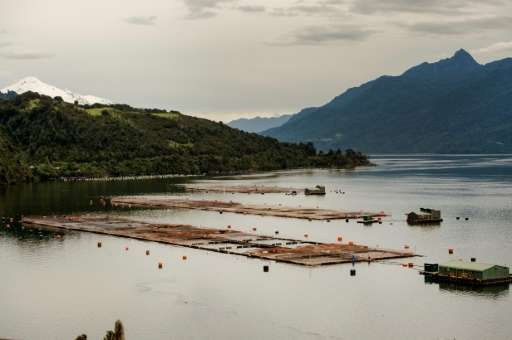 A sea-water salmon farm on Tagua Tagua lake, Puerto Montt, in southern Chile: environmental groups warn the industry has grown s
