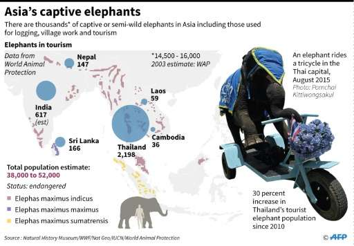 Asia's captive elephants