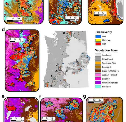 As more of the Pacific Northwest burns, severe fires change forest ecology