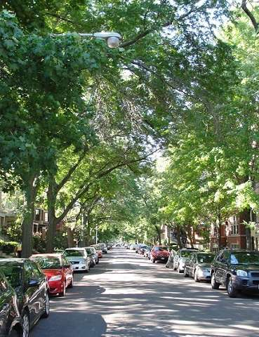 Assessment concludes urban forests in Chicago region face a warmer, wetter future
