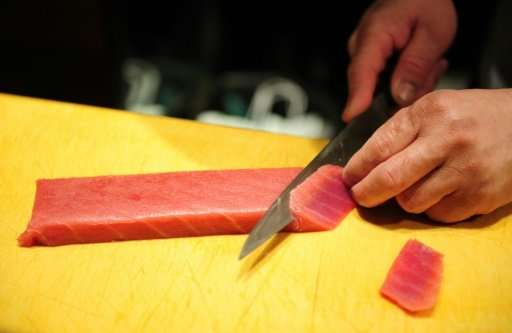 Atlantic bluefin tuna is a culinary mainstay of sushi and sashimi in Japan and can fetch tens of thousands of dollars per fish