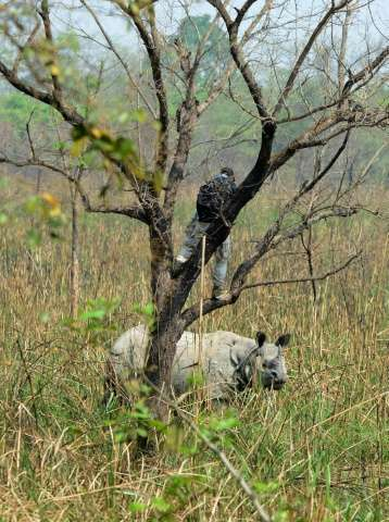 A wildlife technician prepares to dart a rhino in Nepal's Chitwan National Park on April 3, 2017