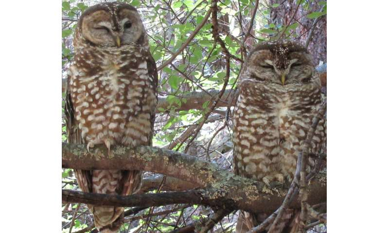 A win-win for spotted owls and forest management