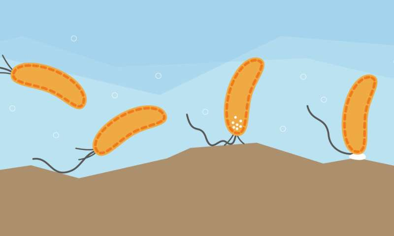 Bacteria have a sense of touch