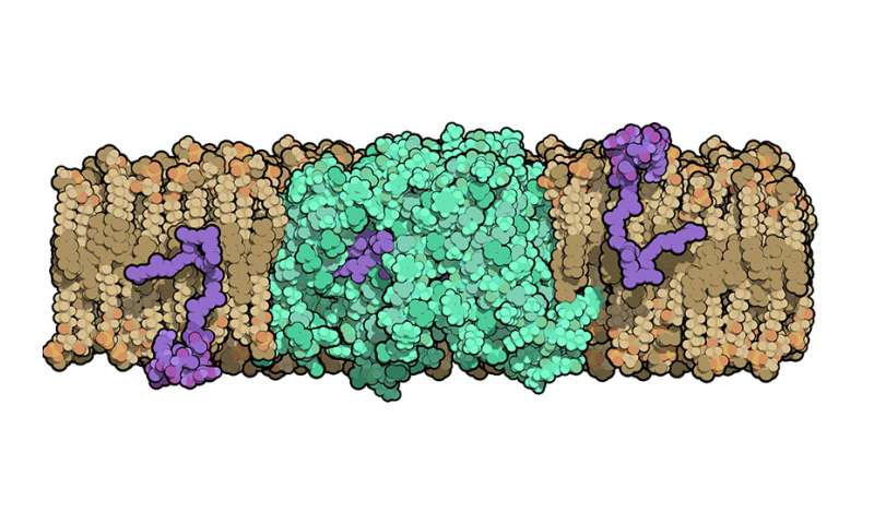 Bacterial protein structure could aid development of new antibiotics