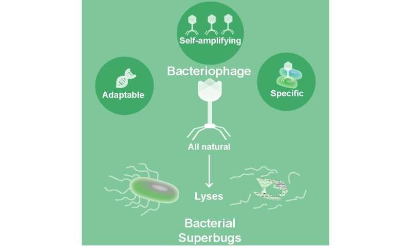 Bacteriophages, natural drugs to combat superbugs