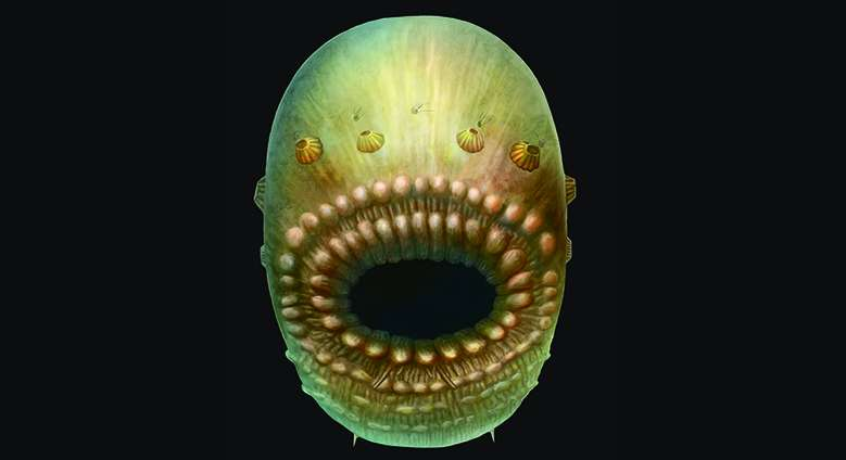 Bag-like sea creature was humans' oldest known ancestor