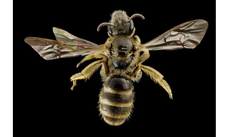 Bee antennae offer links between the evolution of social behavior and communication