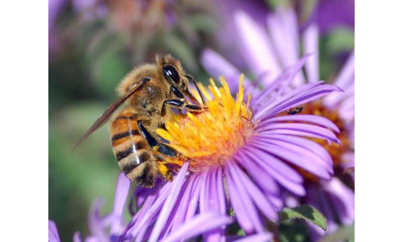 Bees and environmental stressors—canaries in the coal mine