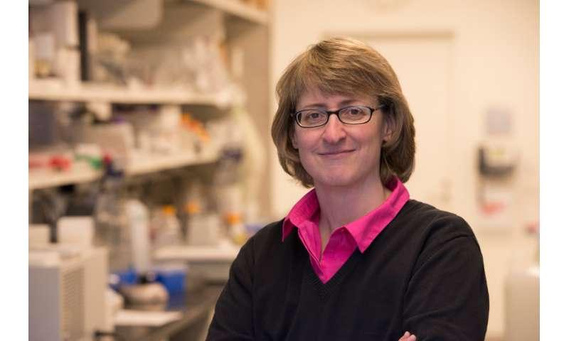 Beyond genomics: Using proteomics to target tumors