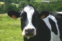 Bigger, more intensive dairy farms may also mean bigger milk footprints