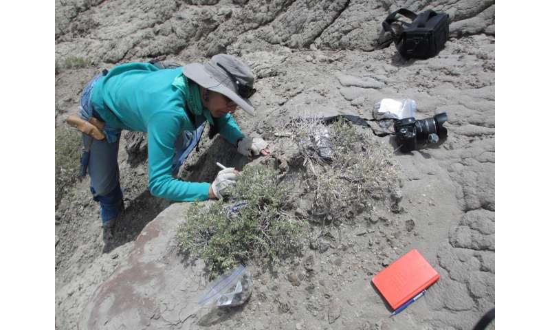 Big herbivorous dinosaurs ate crustaceans as a side dish, says CU Boulder study