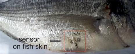 Biodegradable microsensors for food monitoring