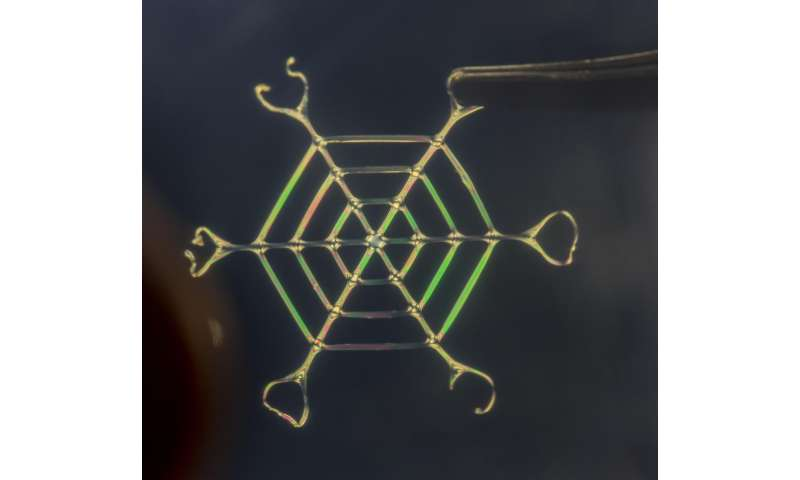 Bioinspired process makes materials light, robust, programmable at nano- to macro-scale