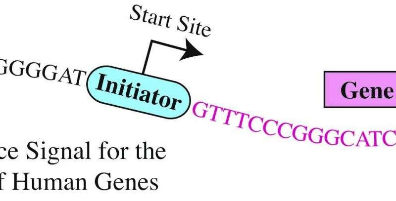 Biologists unlock code regulating most human genes