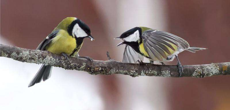 Birds choose their neighbours based on personality