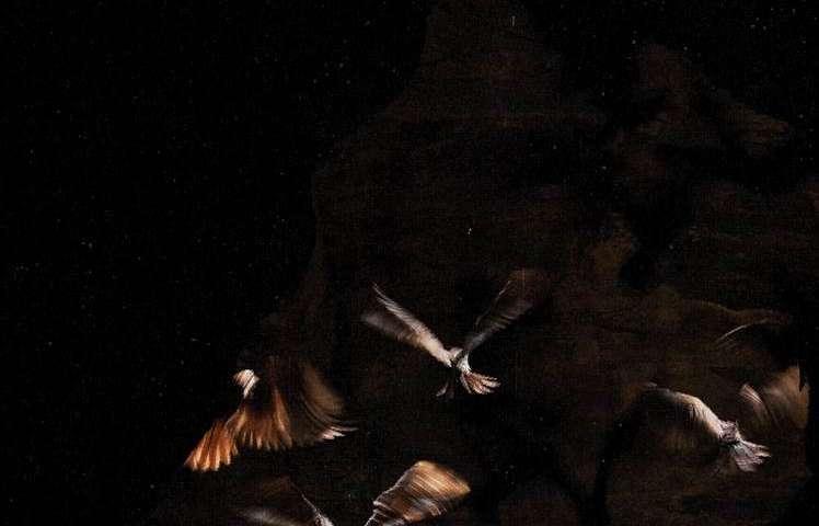 Bird with super senses inspires researchers