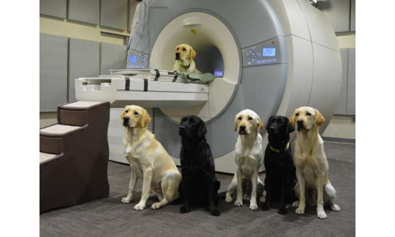 Brain scans of service-dog trainees help sort weaker recruits from the pack