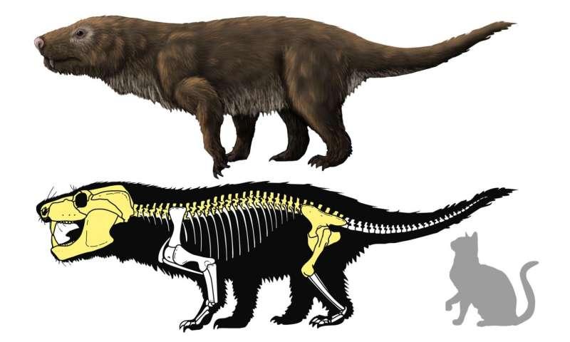 Brazilian carnivorous mammal-like reptile fossil may be new Aleodon species