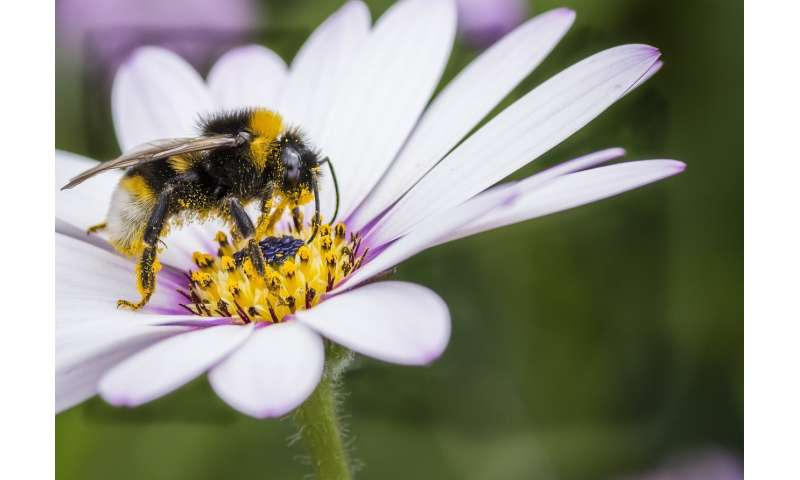 Research finds a new generation insecticide reduces bumblebee egg laying