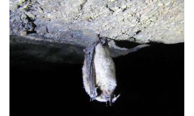 Cameras light up bats in the dark