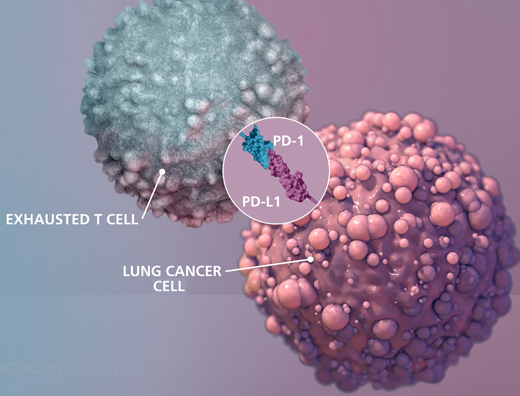 Cancer immunotherapy: Revived T cells still need fuel