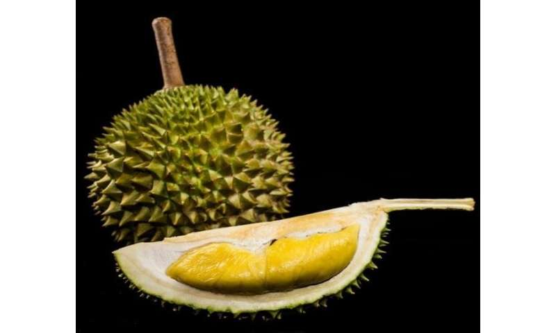 Cancer scientists crack the durian genome