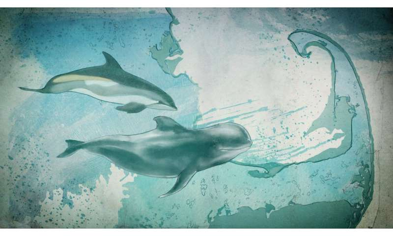 Can data save dolphins?