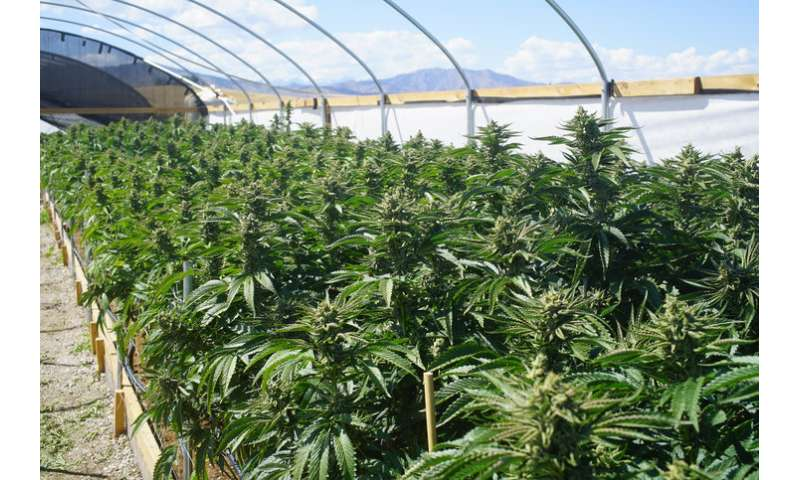 Cannabis crop expansion into forests threatens wildlife habitat, causes other environmental damage