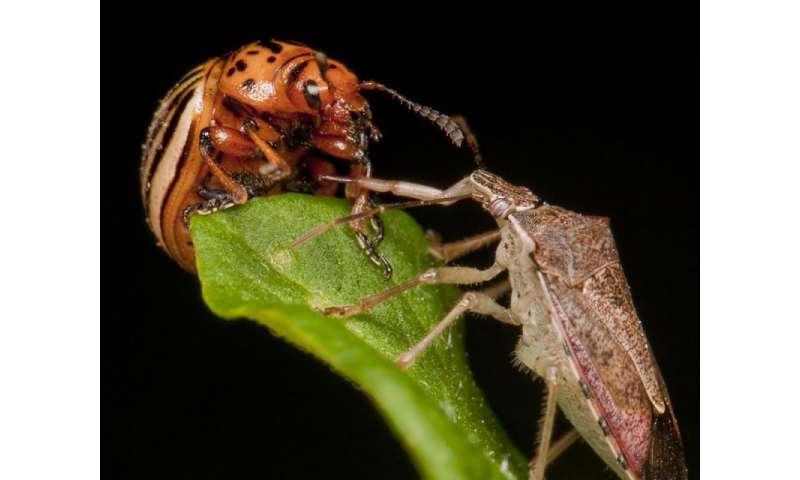 Cannibal larvae eat eggs, grow fast, avoid predators
