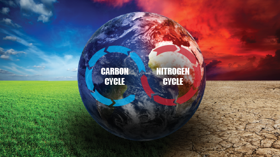 Carbon and nitrogen cycles interact with vegetation shifts