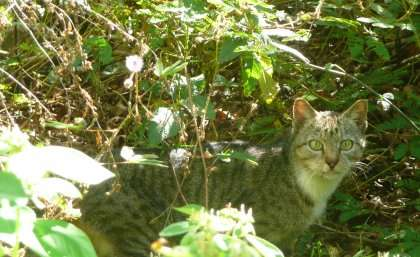 Christmas Island Eradication 2020 Cat eradication to help threatened Christmas Island wildlife