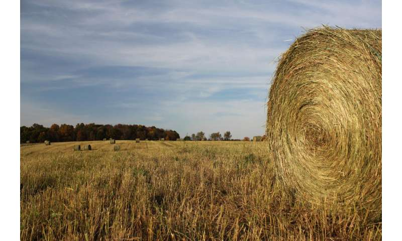 Cellulosic biofuels can benefit the environment if managed correctly