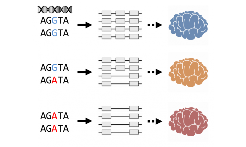 Changes in RNA splicing: a new mechanism for genetic risk in schizophrenia