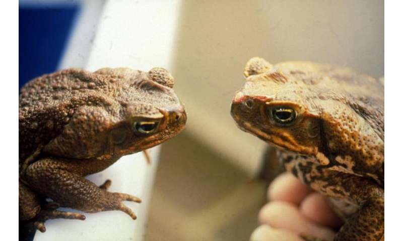 "Changing our attitudes towards invasive ""alien"" species"