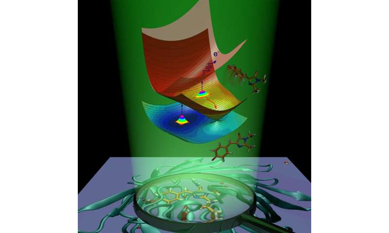 Chemists from the MSU have explained the origin of the green fluorescence