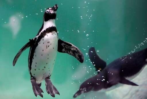 Chile on Monday rejected plans for a $2.5 billion iron-mining project in order to protect thousands of endangered penguins